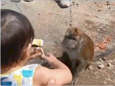 Balita di Sukabumi Luka Parah Akibat Diseret Topeng Monyet saat Beri Saweran, Ibu Histeris