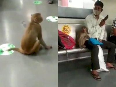 Viral Video Monyet Masuk Kereta Api, Jadi Penumpang dan Duduk Bersama Orang-orang