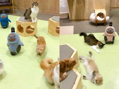 Pet Store di Jepang Menghadirkan Robot & Kucing yang  Menggemaskan