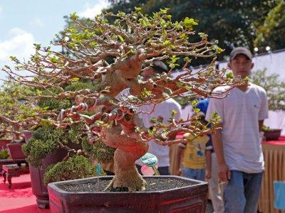 FOTO: Pameran Bonsai Tingkat Nasional di Jateng