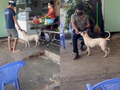 Viral Video Anjing Peliharaan Jadi 'Kasir' di Sebuah Restoran, Aksinya Bikin Netizen Gemas