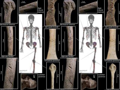 Peneliti Berhasil Temukan Tulang yang Tewas Mengenaskan pada Hiu