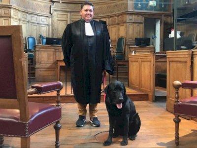 Anjing Hitam Ini Bekerja di Pengadilan untuk Membantu Menenangkan Korban yang Cemas