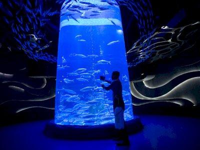 FOTO: Perawatan Satwa Jakarta Aquarium Saat PPKM Mikro