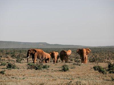 Pertama Kali dalam Sejarah, Gajah Kebun Binatang akan Dilepasliarkan di Kenya