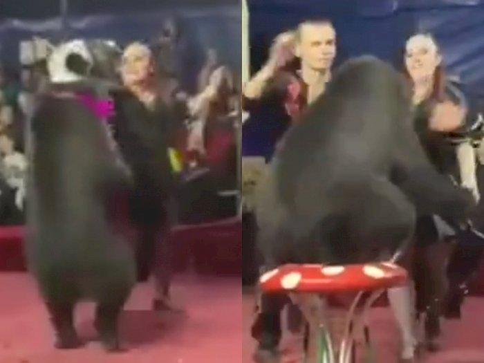 Detik-detik Mencekam, Beruang Sirkus Justru Menyerang Pelatih Wanita saat Pertunjukkan