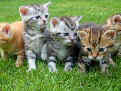 Penelitian: Kucing Lebih Rentan Terinfeksi COVID-19 daripada Anjing