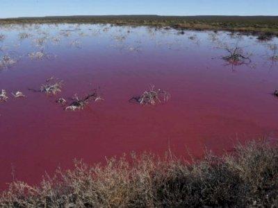 Laguna di Argentina Berubah Warna Jadi Pink Mencolok, Disebabkan Karena Polusi Bahan Kimia