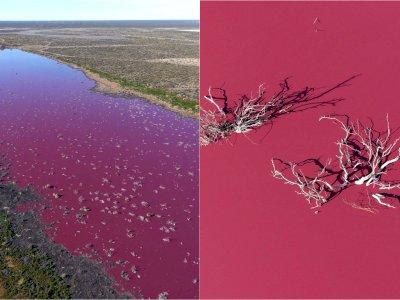 Danau di Argentina Berubah Jadi Pink, Tampak Indah Tapi Berbahaya
