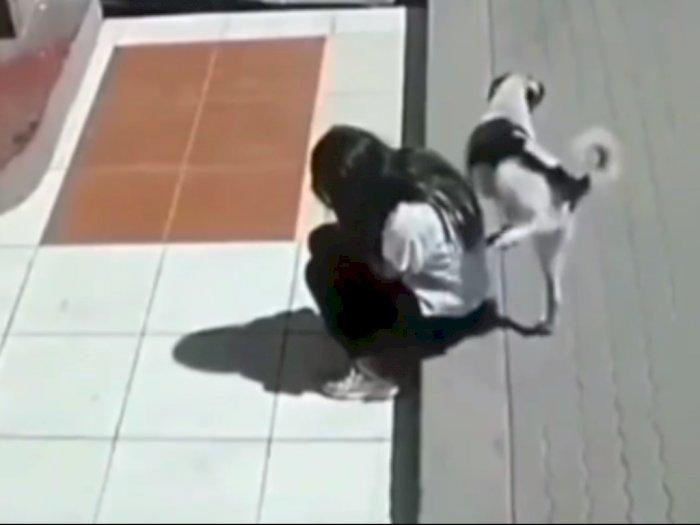 Astaga! Kira Tak Ada Orang, Anjing Ini Pipis di Punggung Wanita, Kabur saat Ketahuan