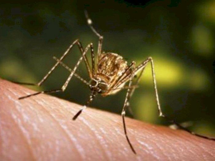 Rusia Peringatkan Potensi Kenaikan Kasus Virus West Nile pada Musim Gugur
