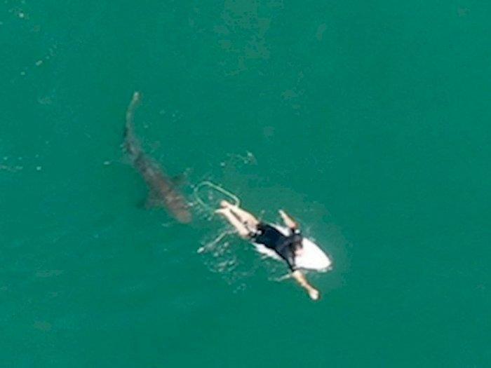 Seperti Adegan Film, Peselancar Tewas Diserang Hiu di Pantai Australia