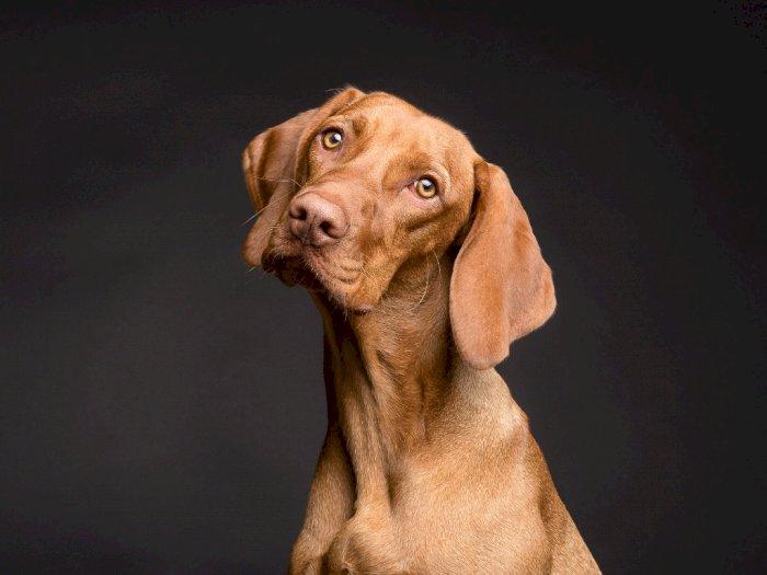 Wagub DKI akan Tindak Tegas Penjual Daging Anjing  di Pasar Senen