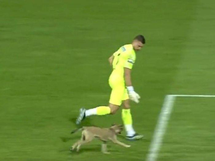 Momen Seekor Anjing Menyusup ke Pertandingan Liga Turki, Lari-larian di Rumput