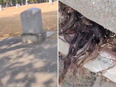 Ngeri! Pria ini Terkejut Saat Menemukan Rambut Menyembul dari Kuburan Berusia 100 Tahun