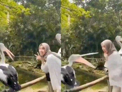 Asyik Berfoto, Tangan Cewek Ini Nyaris Digigit Burung Pelikan di Taman, Netizen Ngakak