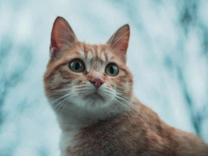 Mitos atau Fakta, Kucing Memiliki Nyawa Sembilan, Tak Mati Meski Jatuh dari Ketinggian
