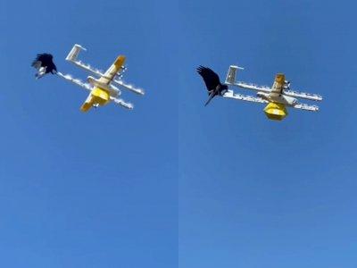 Viral Momen Gagak Menyerang Drone Pengirim Makanan, Dianggap 'Angry Bird' Dunia Nyata!