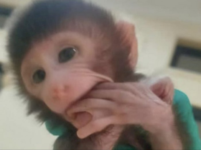 Karantina Lampung Gagalkan Penyelundupan Belasan Ekor Monyet Tanpa Dokumen Lengkap