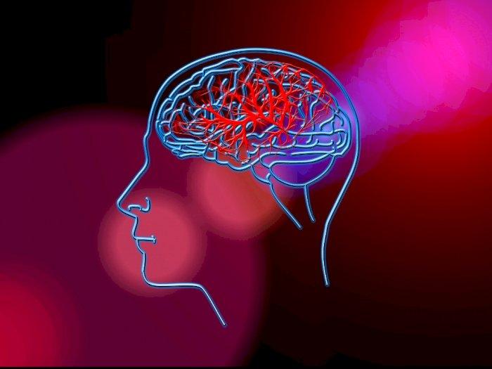 Penyebab Pendarahan Otak yang Wajib Diwaspadai,  Salah Satunya Kebiasaan Ngeden