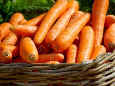 10 Makanan yang Bikin Awet Muda dan Mencegah Penuaan
