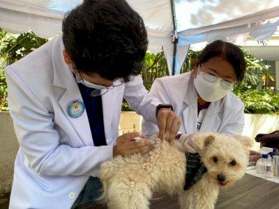Masyarakat Diajak Aktif Mencegah Penyakit Rabies dengan  Vaksinasi