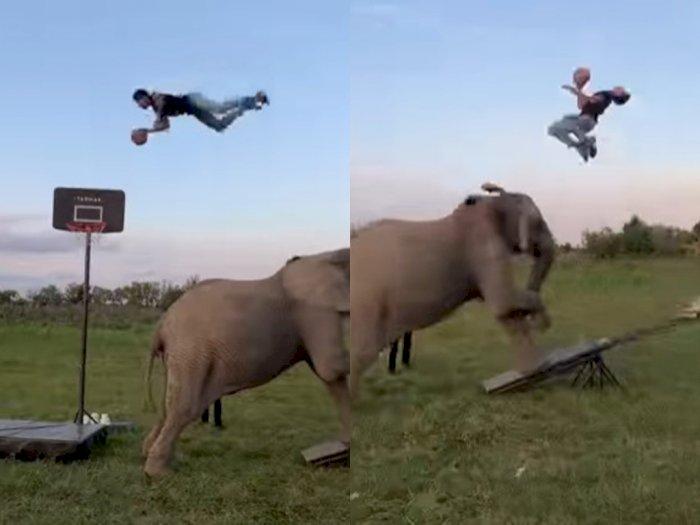 Viral Video Seorang Pria Lakukan Slam Dunk dengan Bantuan Gajah, Bikin Netizen Takjub