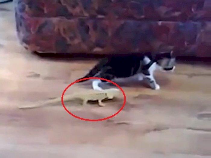 Momen Anak Kucing Nggak Sadar Didekati Kadal dari Belakang, Endingnya Buat Jantung Copot