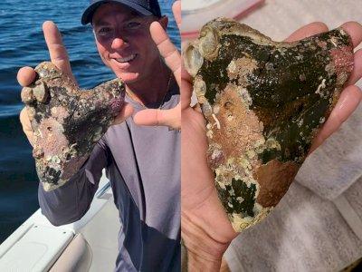 Kapten Kapal Ini Menemukan Gigi Besar Milik Hiu Megalodon Prasejarah Berukuran 16 Inci