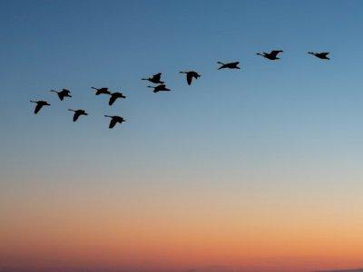 Perubahan Iklim Beri Dampak Migrasi Hewan, Populasi Burung & Kehidupan Laut Berkurang