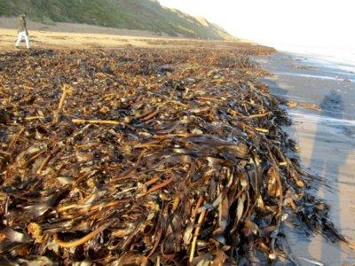 Ribuan Makhluk Laut Terdampar Mati di Pantai Inggris, Misteri Terburuk yang Pernah Ada