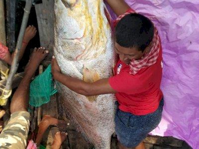 Greget! Nelayan Ini Tangkap Ikan Raksasa Seberat 75 Kg, Terjual Seharga Rp739 Juta