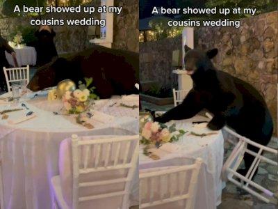 Video Beruang Berikan 'Kejutan' di Hari Pernikahan, Kebahagiaan Berubah Histeris