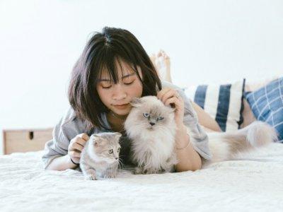 4 Kepribadian Unik yang Dimiliki Pecinta Kucing, Salah Satunya Suka Tidur