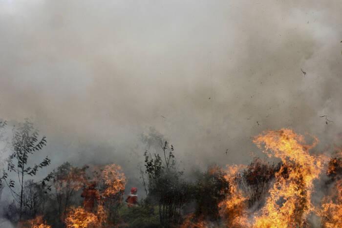 Satgas Kebakaran Hutan dan Lahan (Karhutla) Riau yang terdiri dari petugas Manggala Agni Daops Pekanbaru, BPBD Pekanbaru, Masyarakat Peduli Api dan TNI Polri berusaha memadamkan api yang membakar lahan