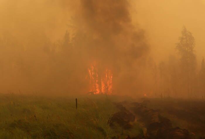 Seorang petugas pemadam kebakaran bekerja untuk memadamkan kebakaran hutan di Yakutia