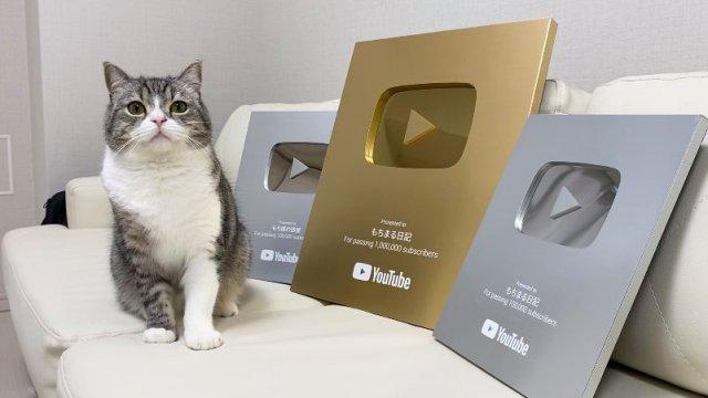 Kucing asal Jepang Ini Pecahkan Rekor Dunia Gara-gara Youtube